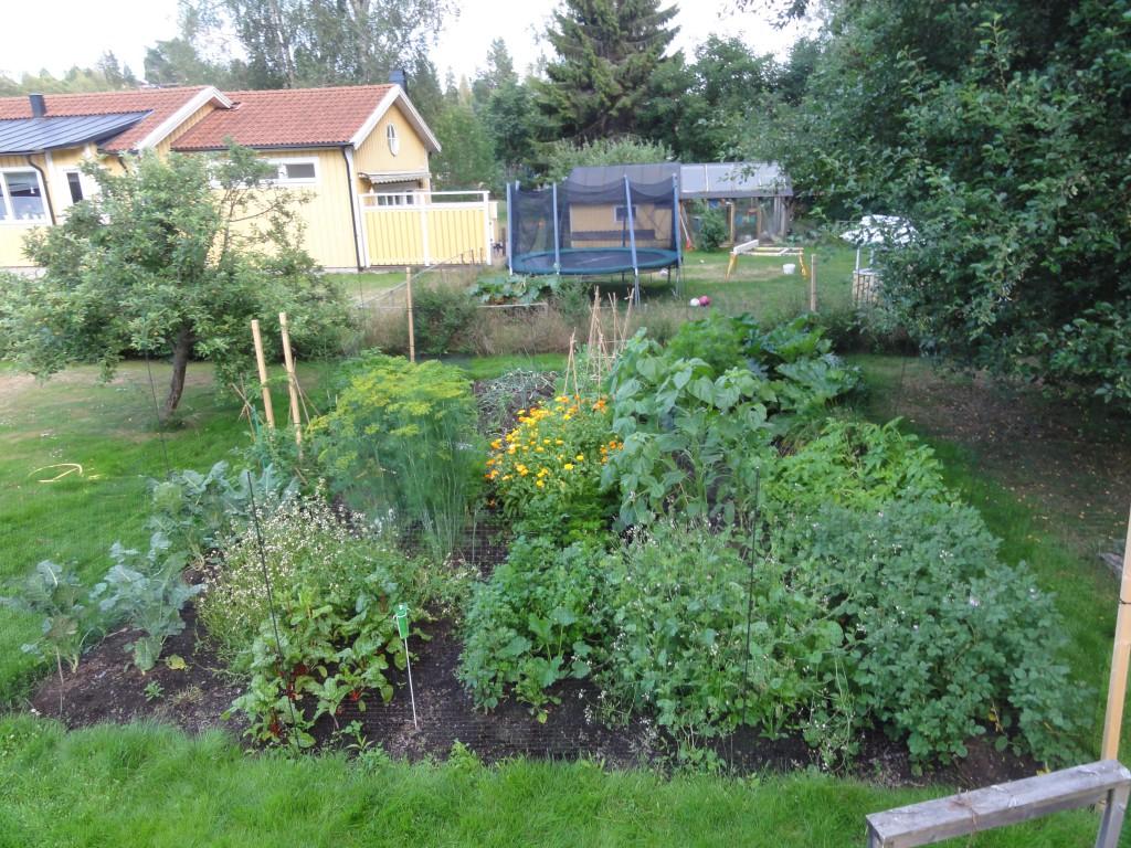 I mitten av juli såg det ut så här i trädgården!