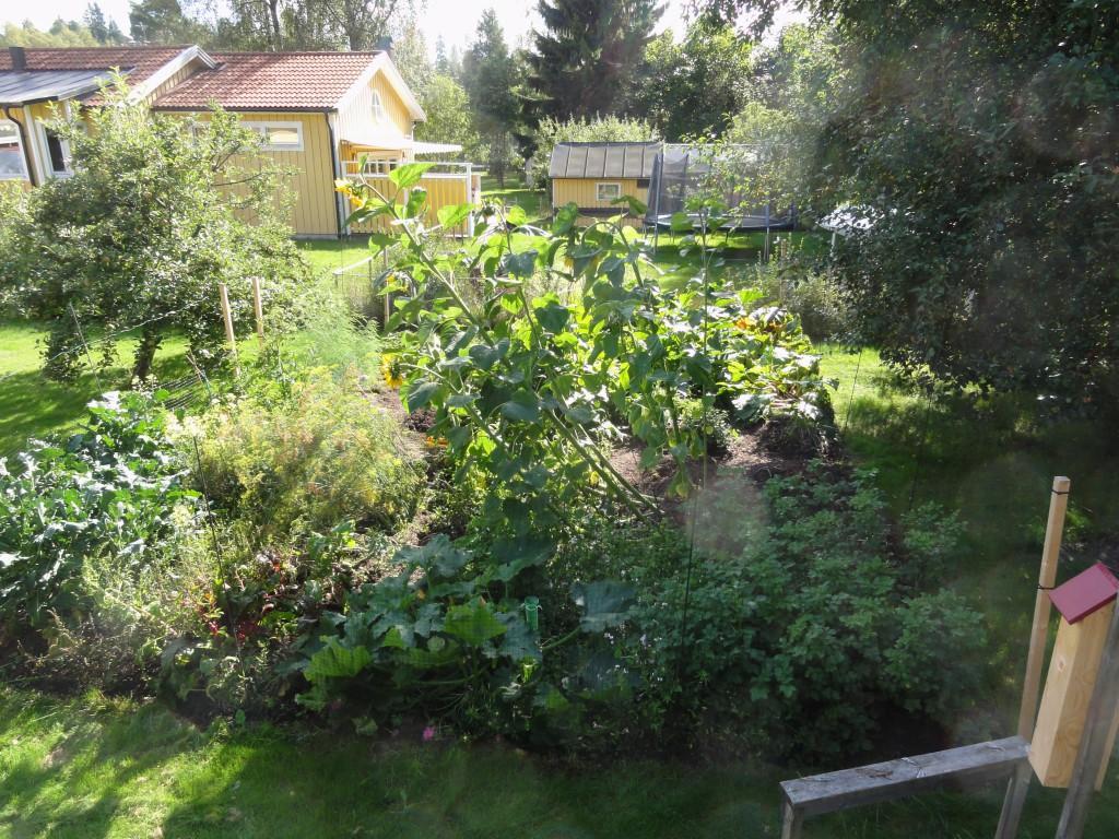 Så här ser trädgårdslandet ut i början av september.