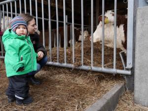 Rafael har tittat på kossor vid Uddby Gård
